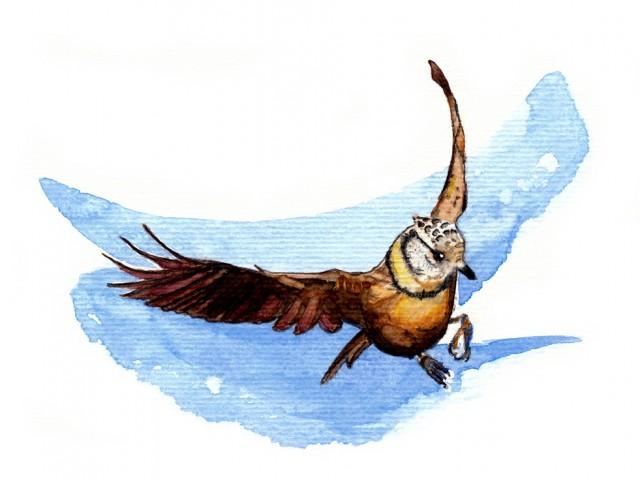 Oiseau à l'aquarelle