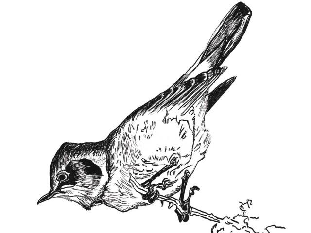 Oiseau à la plume