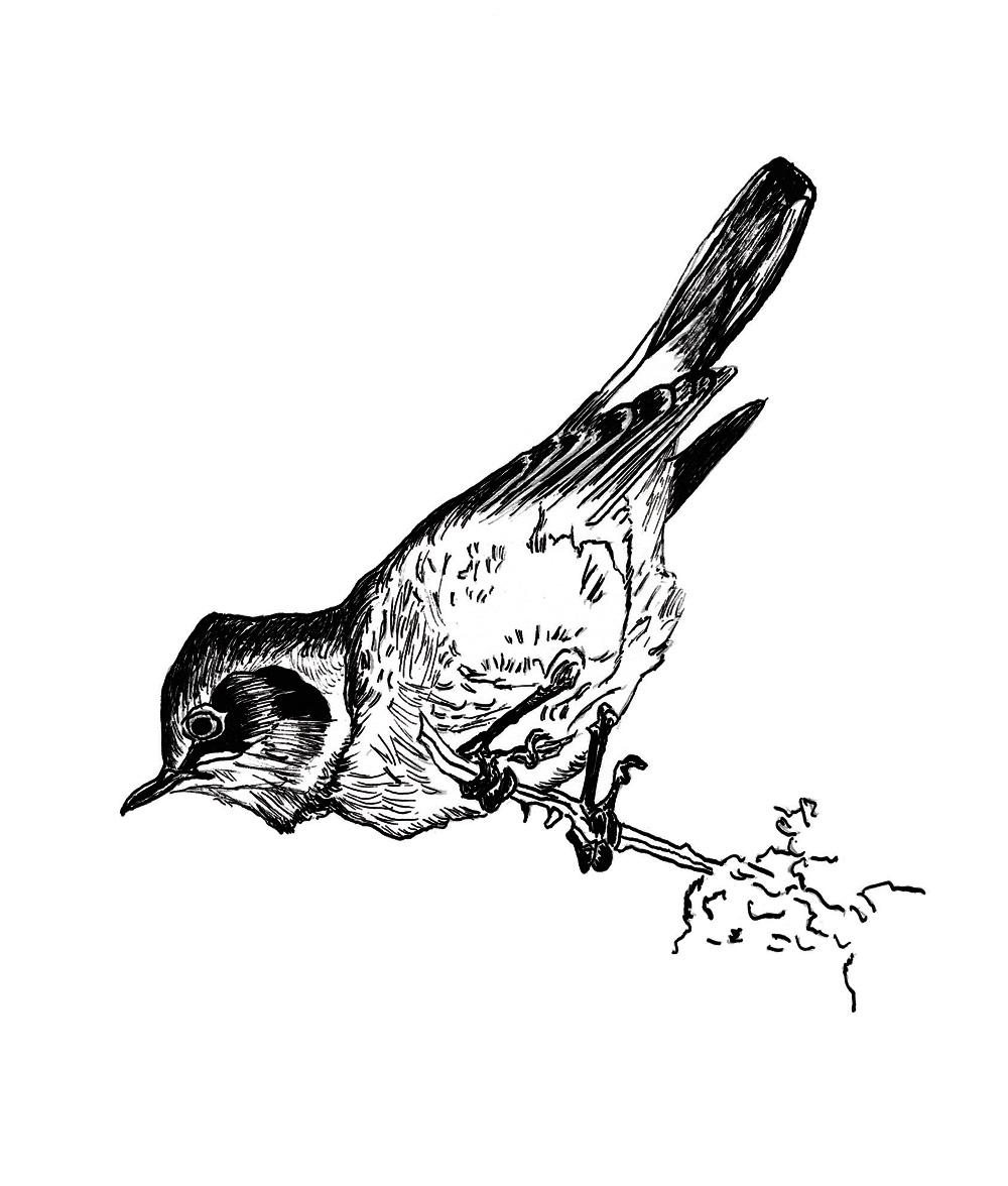 oiseau encre de chine